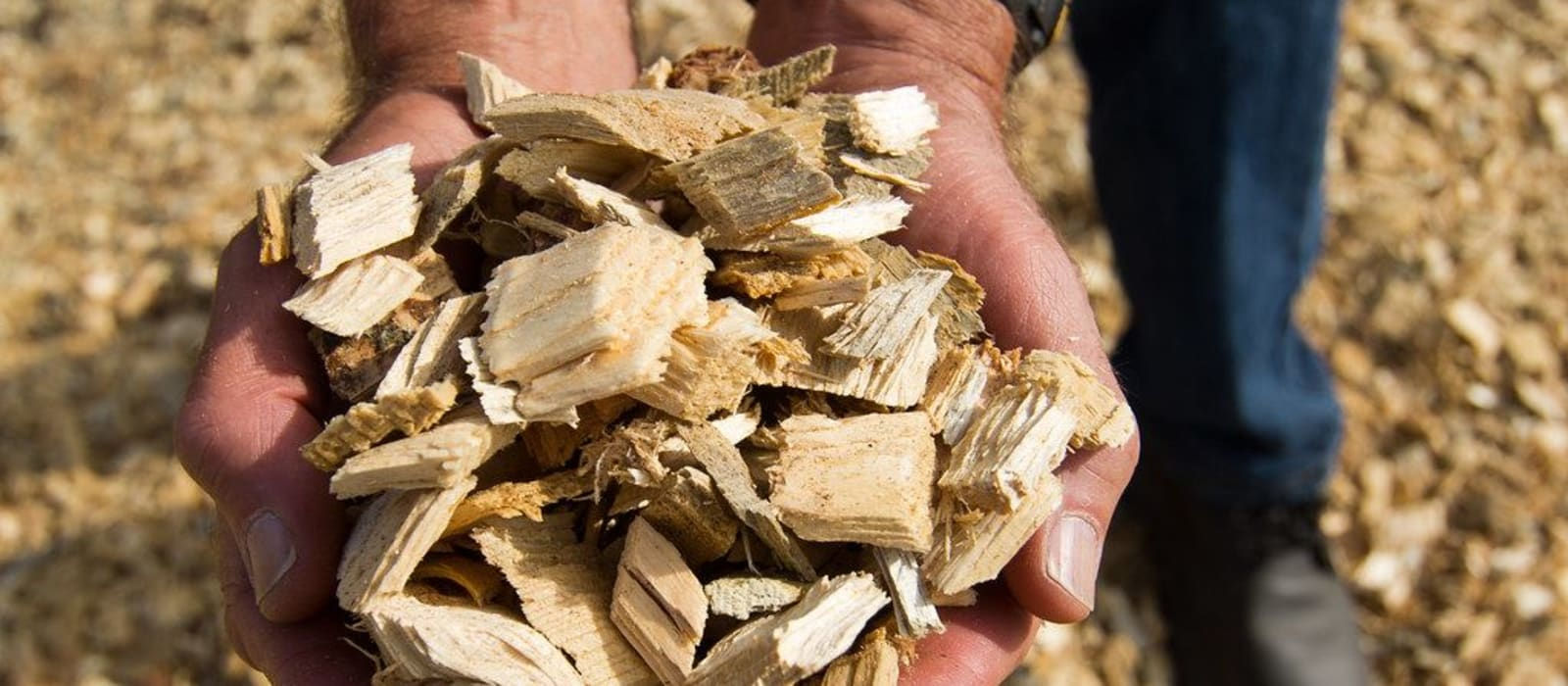Biomass burning is a climate cul de sac