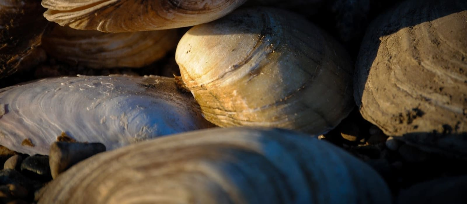 Submission on Draft Plan for Forests & Freshwater Pearl Mussel in Ireland