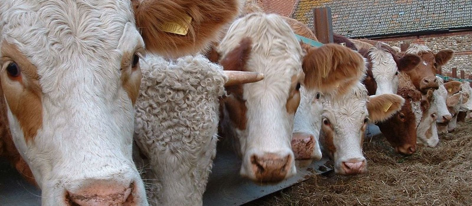 Joint Committee on Agriculture, Food And The Marine Call for Submissions The Future of The Beef Sector